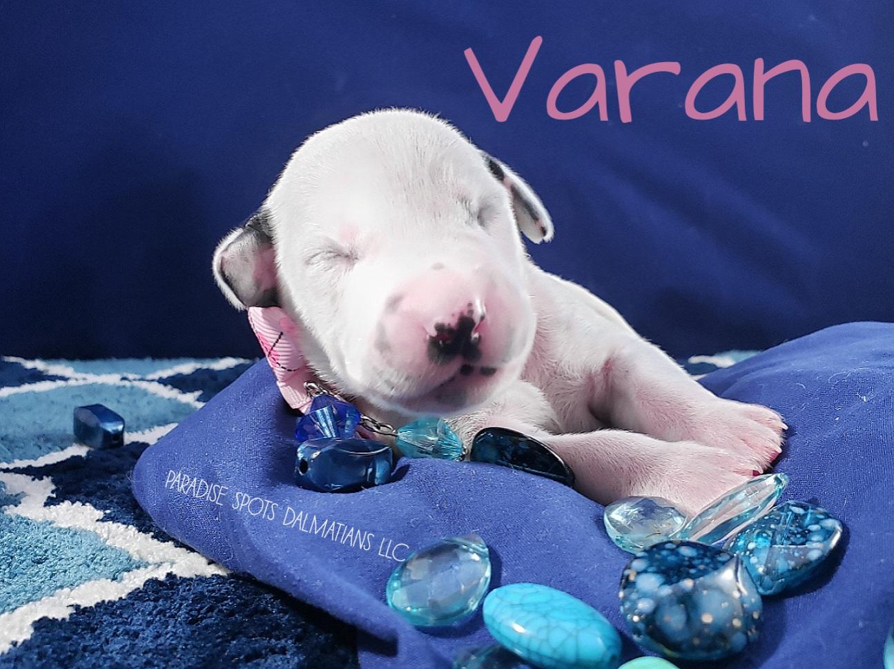 Varana-1w (5)