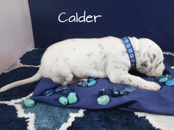 Calder-2w (2)