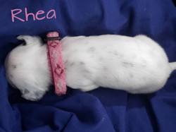 Rhea-2w (7)