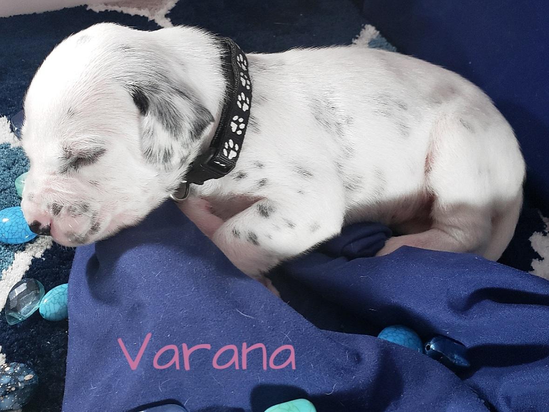 Varana-2w (9)