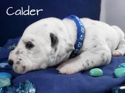 Calder-2w (7)