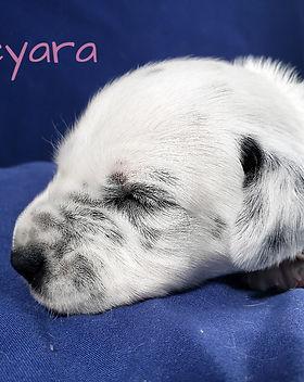 Keyara-2w (1)_edited.jpg