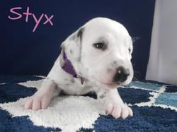 Styx-2w (3)