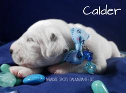 calder-1w (4)