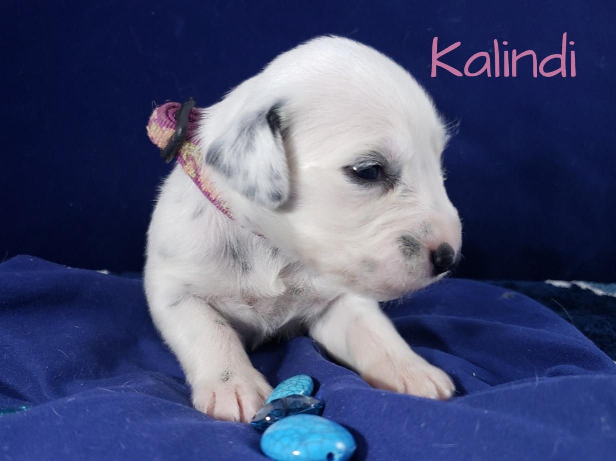 Kalindi-2w (8)