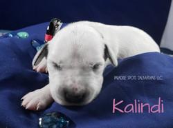 Kalindi-1w (3)