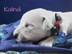 Kalindi-1w (2)