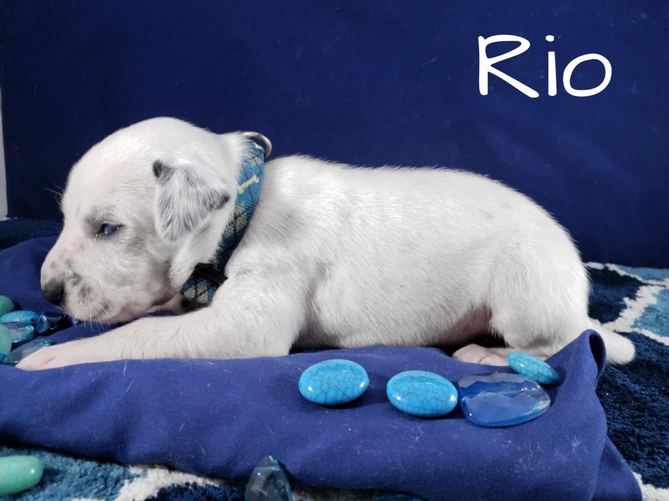 Rio-2w (6)