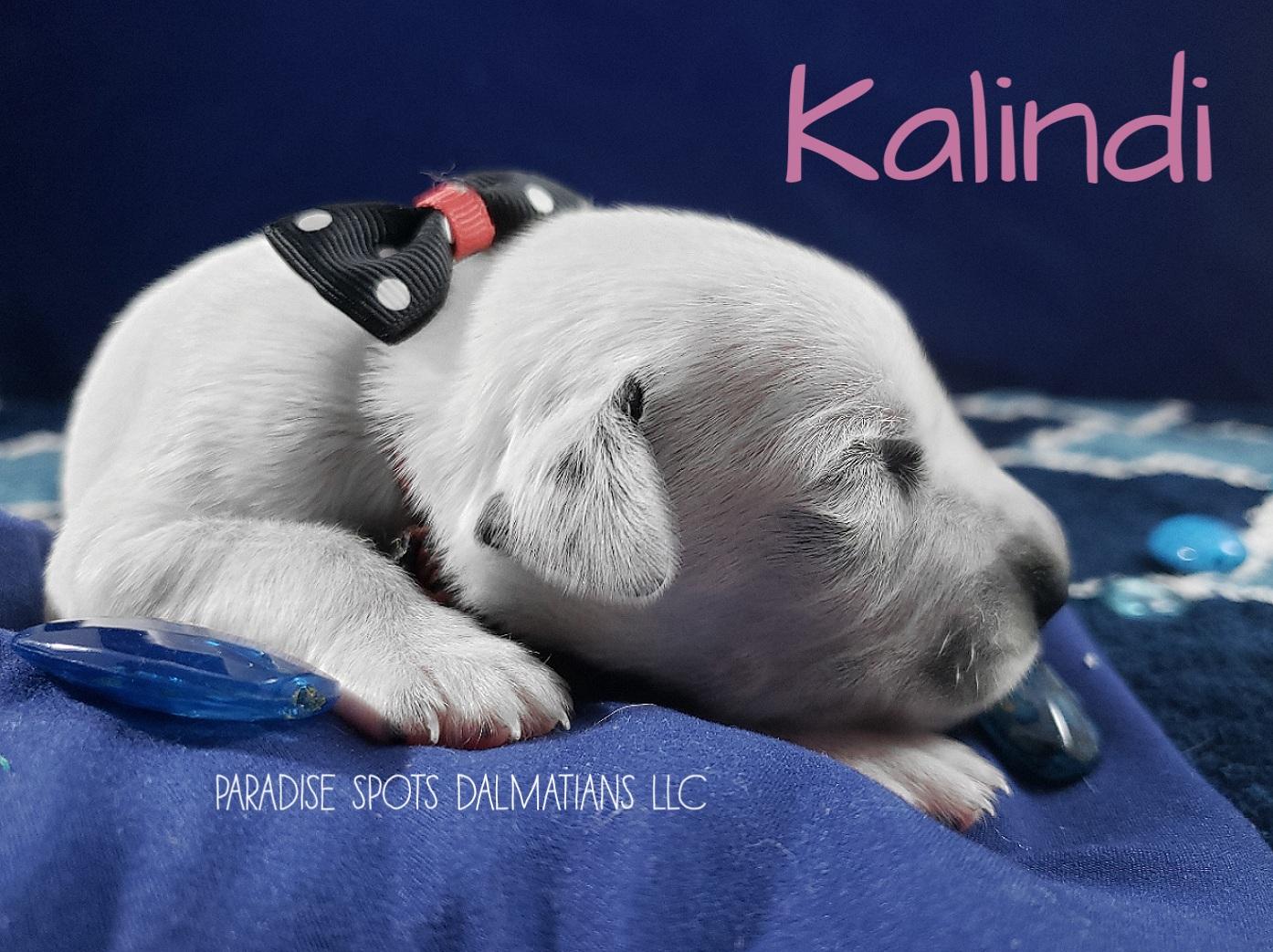 Kalindi-1w (4)