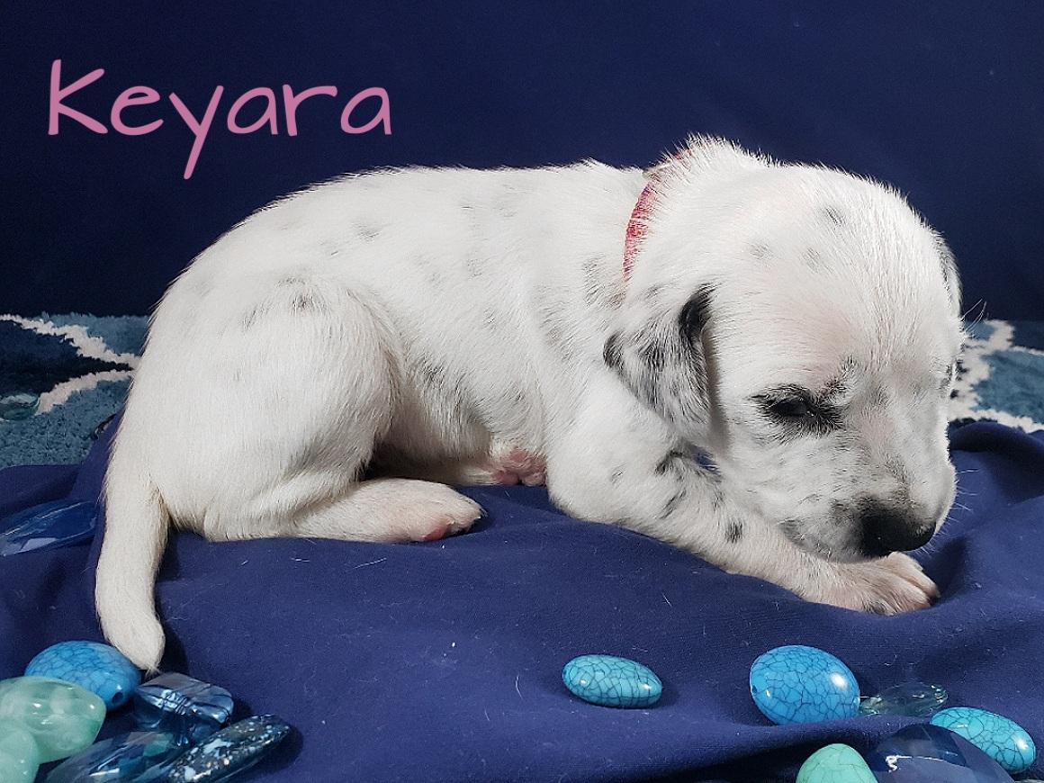 Keyara-2w (5)