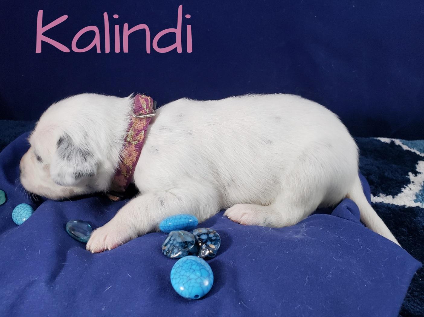 Kalindi-2w (7)