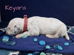 Keyara-2w (6)