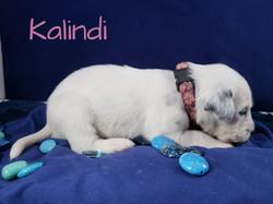 Kalindi-2w (6)