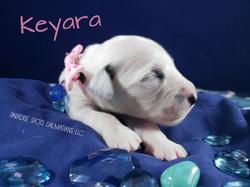 Keyara-1w (3)