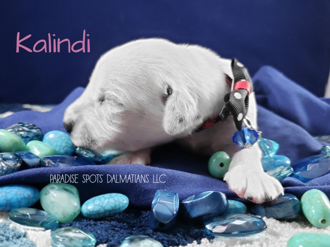 Kalindi-1w (5)