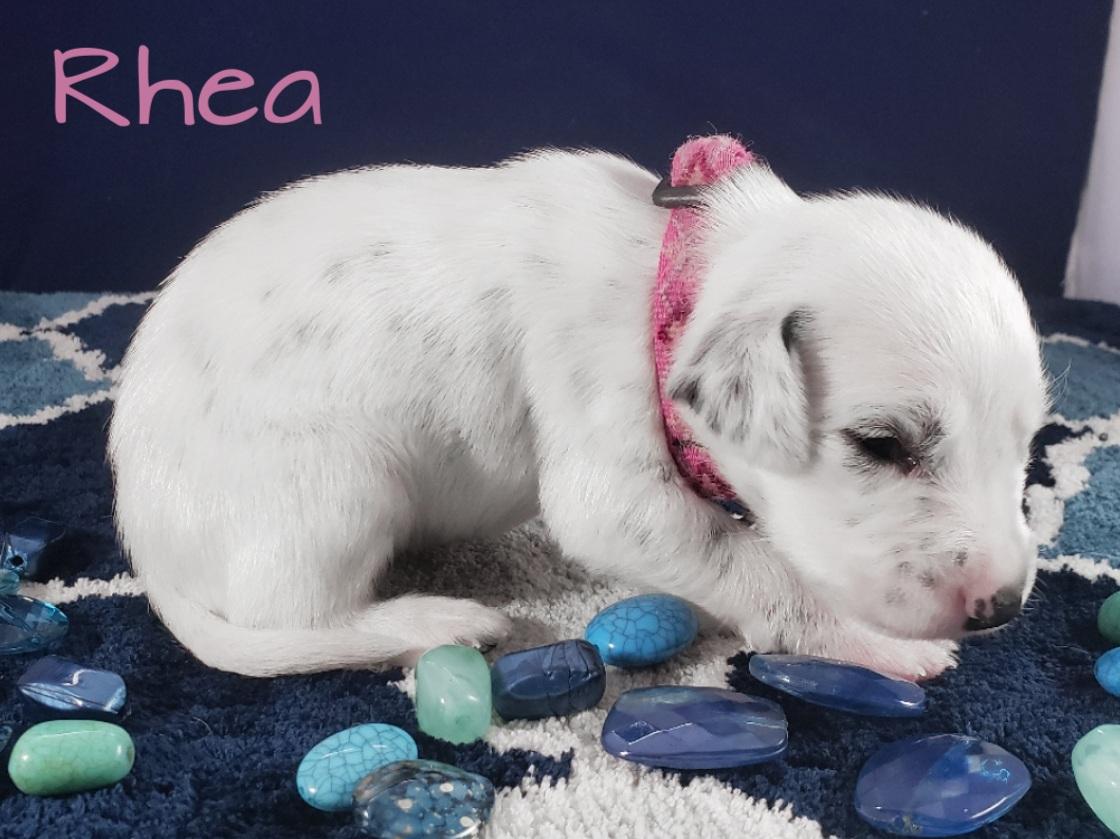 Rhea-2w (8)