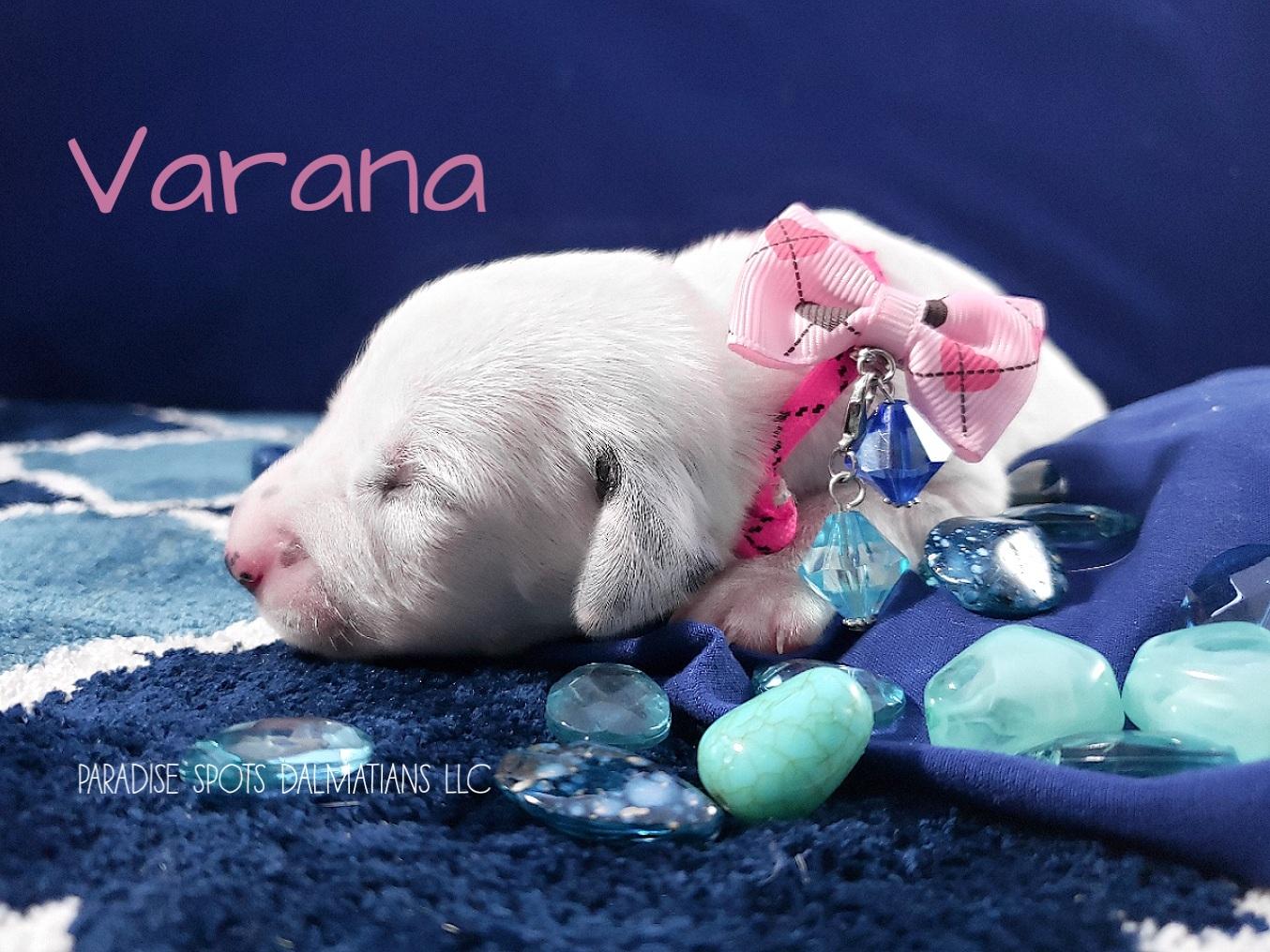 Varana-1w (3)