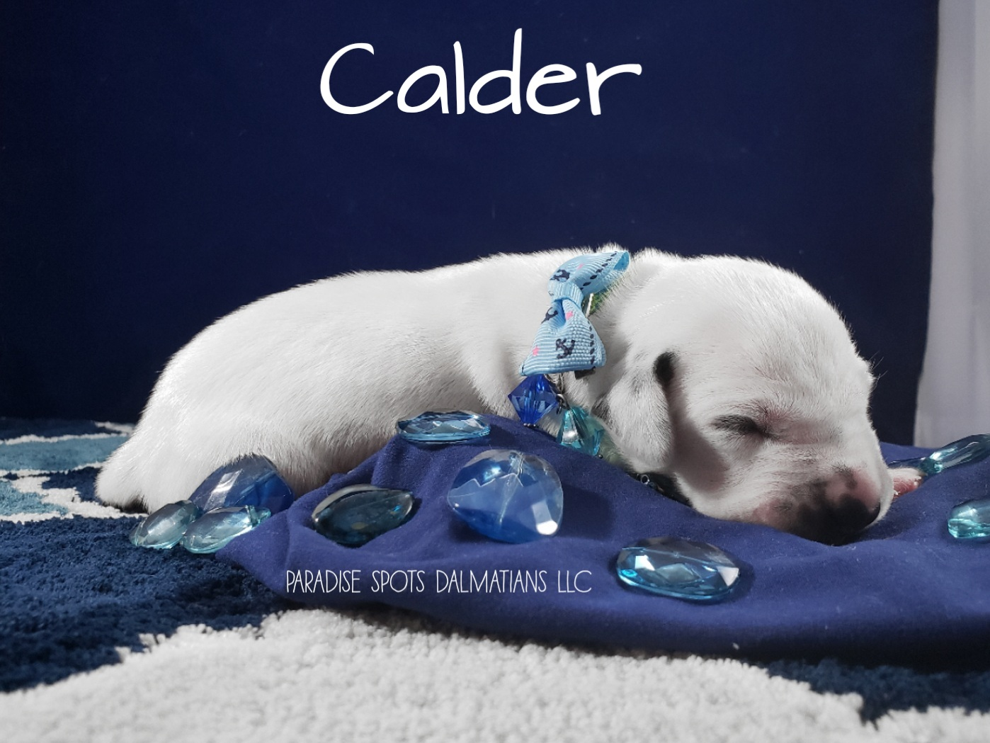 calder-1w (2)