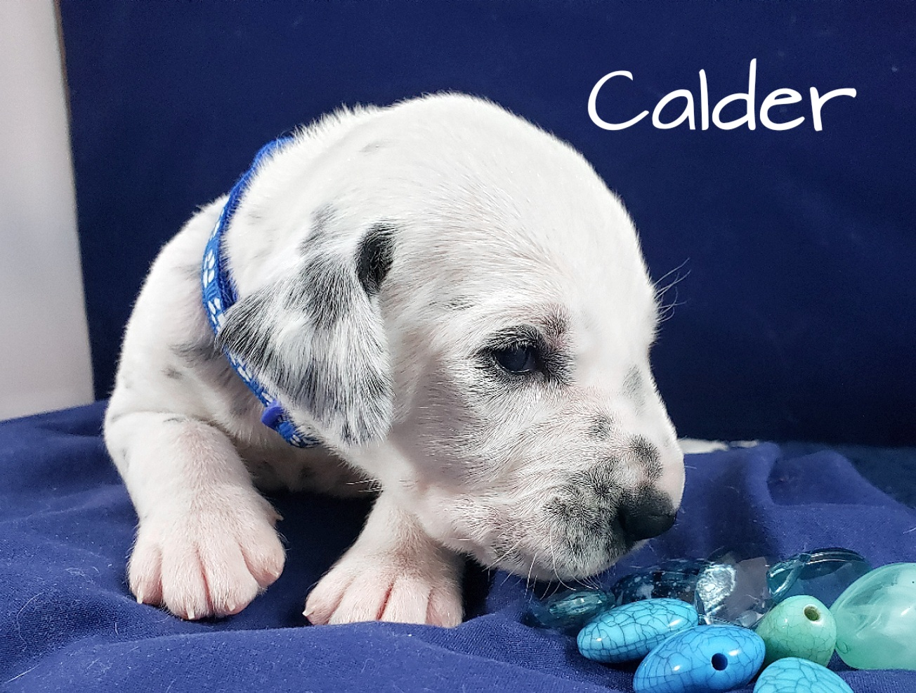 Calder-2w (3)