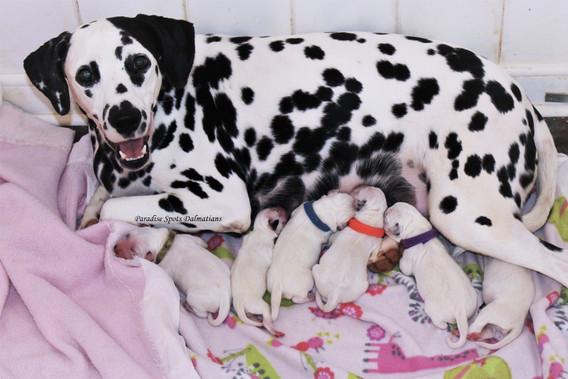 Suzie Newborn Puppies (2).JPG