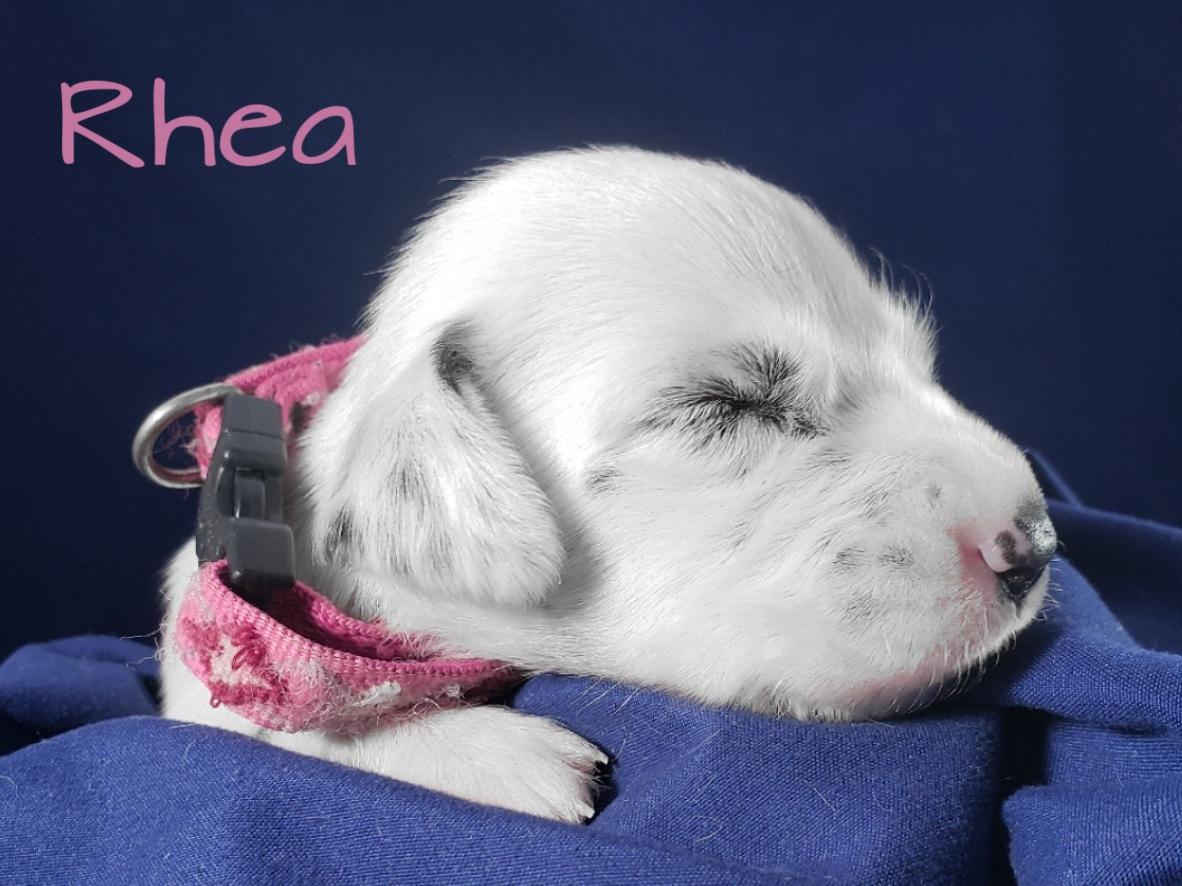 Rhea-2w (5)