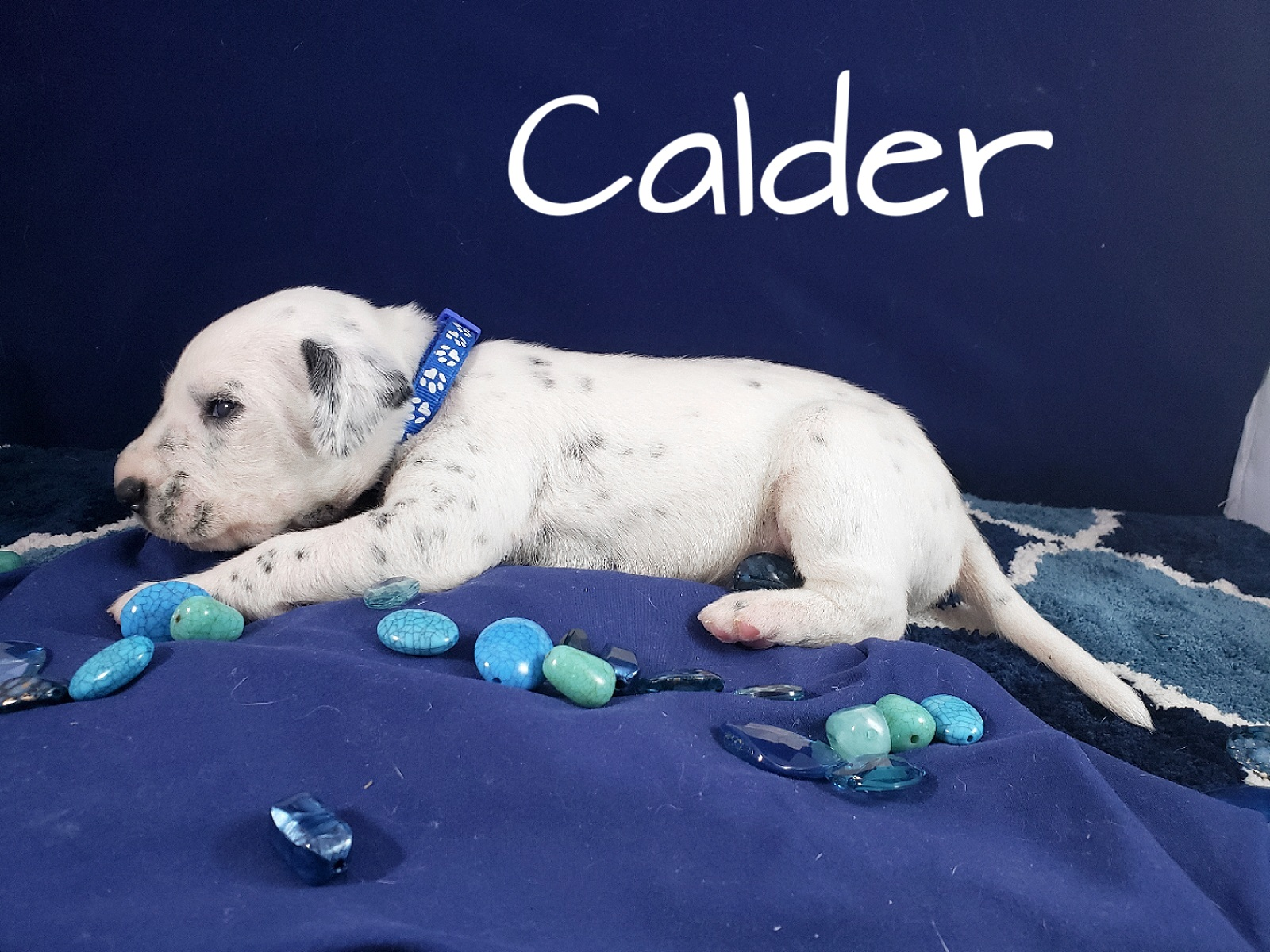 Calder-2w (1)
