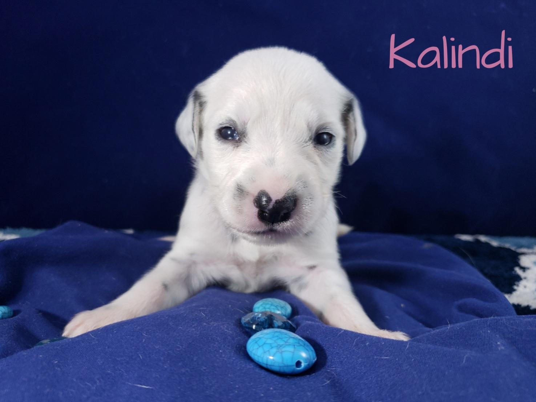 Kalindi-2w (1)