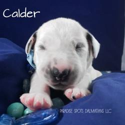calder-1w (5)
