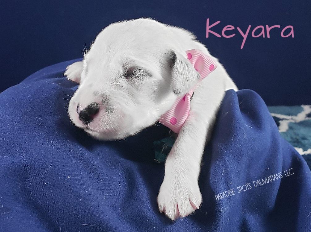 Keyara-1w (2)