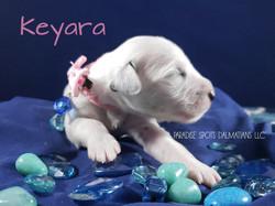 Keyara-1w (5)