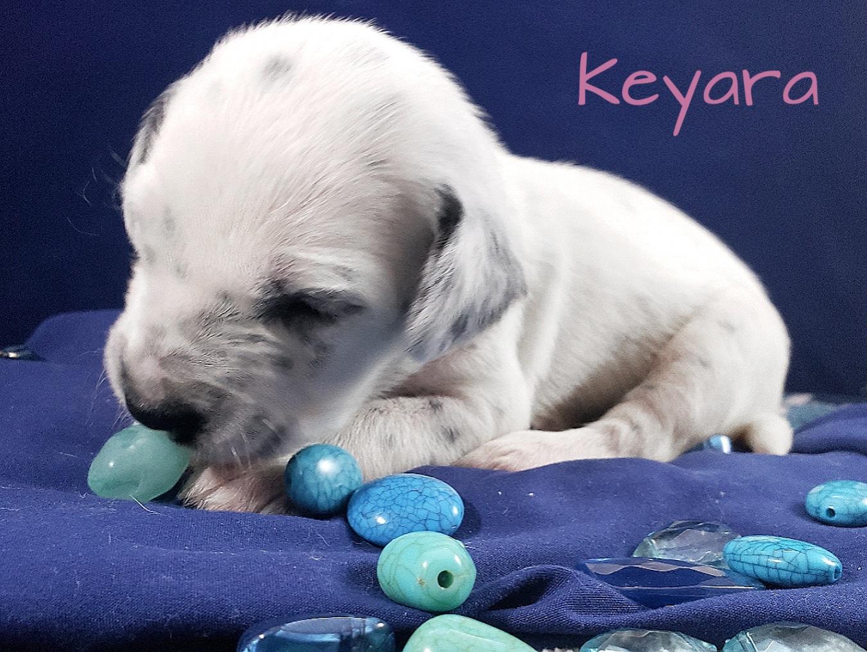 Keyara-2w (7)