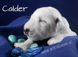 calder-1w (1)