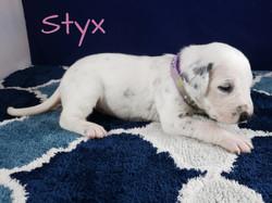 Styx-2w (6)