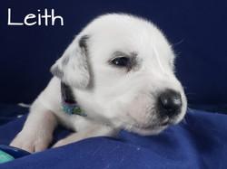 Leith-2w (8)