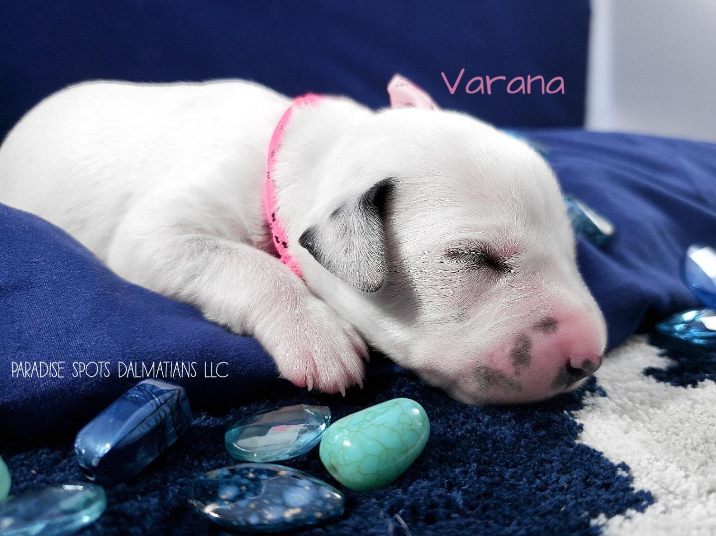 Varana-1w (2)