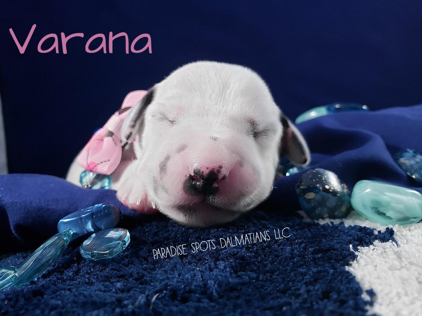 Varana-1w (1)