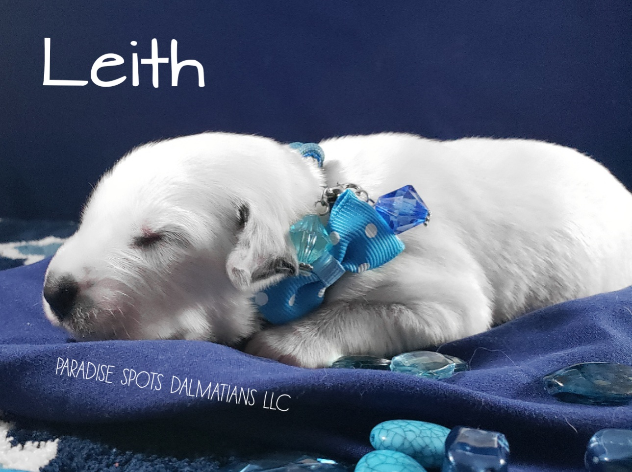 Leith-1w (5)
