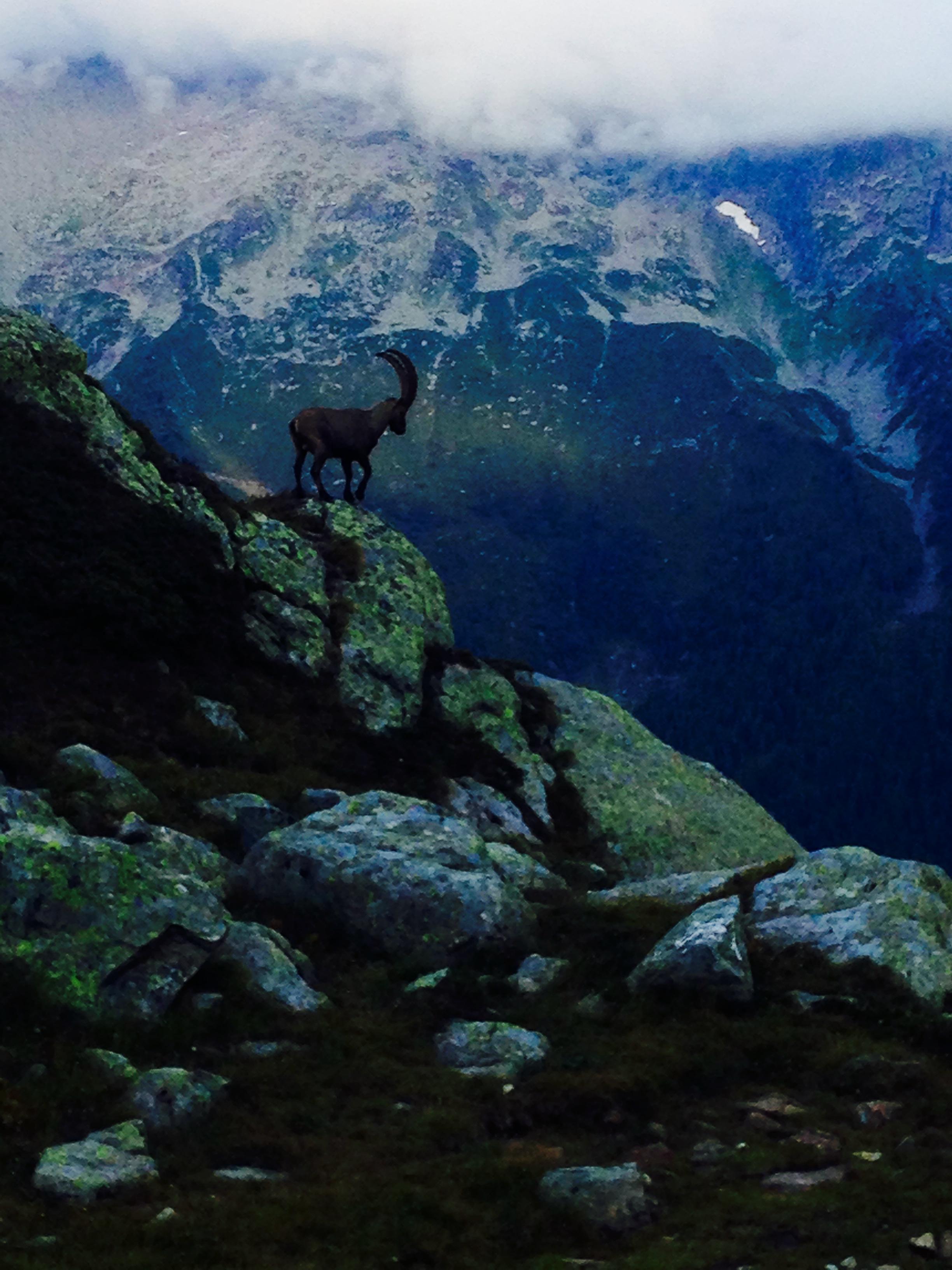 goat lac blanc.jpg