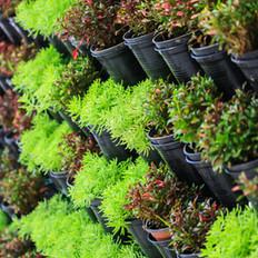 Insect Deterrent Plants