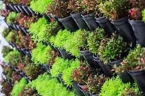 Tienda de plantas