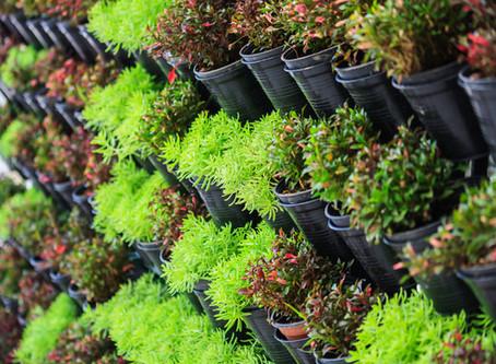 Choosing Plants in Calgary