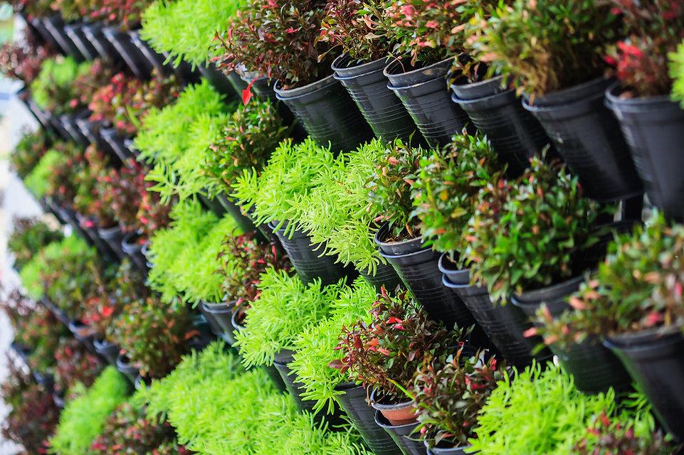 Magasin de plantes