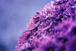 flower_violet_by_elaera-d5im02k