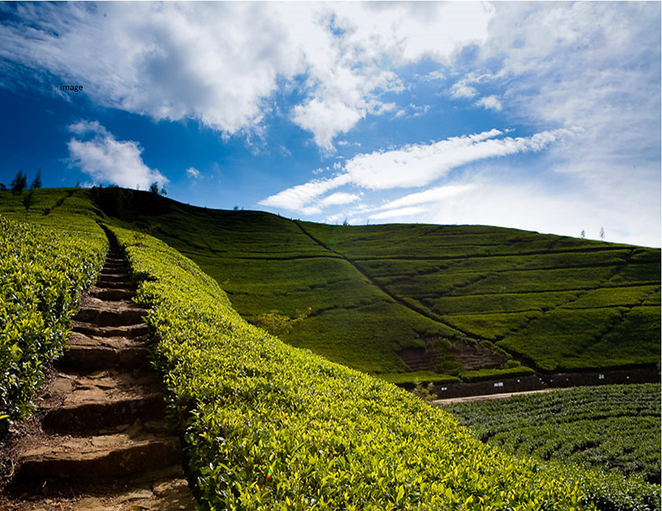 steps on mountain.jpg