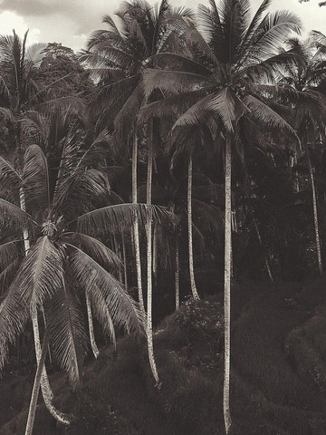 04.-Bali-Image-1-1097x1536.jpg