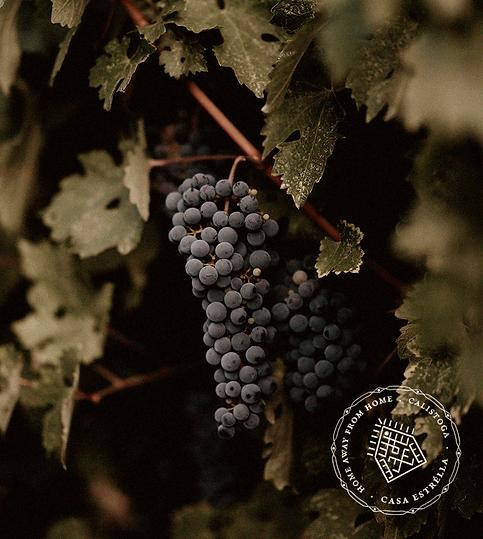wine-grapes. Casaestrélla.png