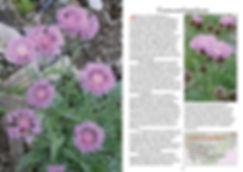side 26 og 27 tb.jpg