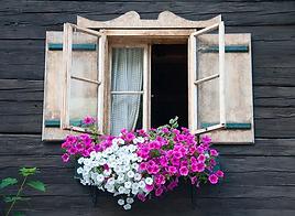 Flores ventana.png