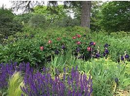 tu jardin 2.jpg
