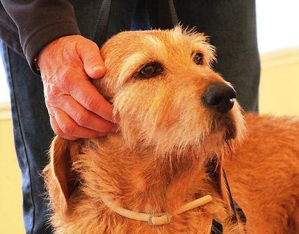 Italy TT dog ear ttouch.jpg